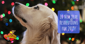 10 New Year Resolutions For 2019