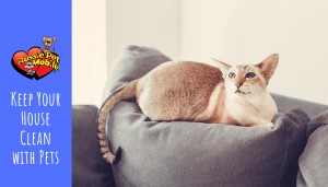 Keep Your House Clean with Pets